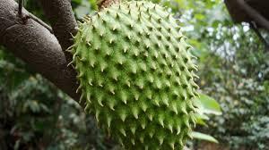 """Verde con puntas es""""Guanábana"""""""